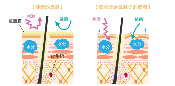 皮脂量減少和皮膚功能下降
