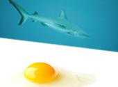 Fish-Tissue-Extract-Lipid-Egg-Yolk-Lecithin