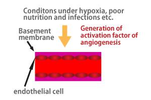 angiogenesis02