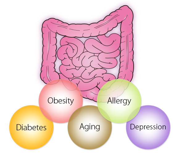 intestinal-flora and related diseases