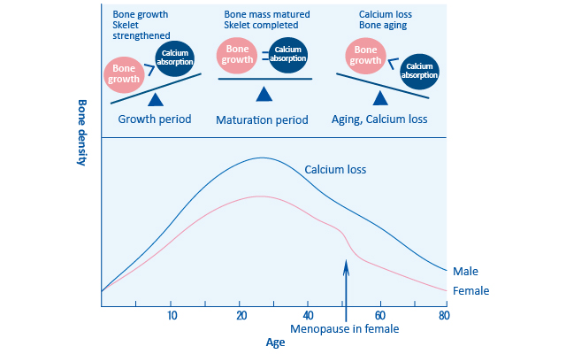 Age and bone metabolism