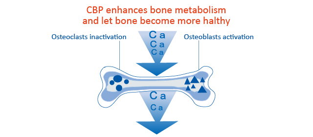 CBP supports bone health