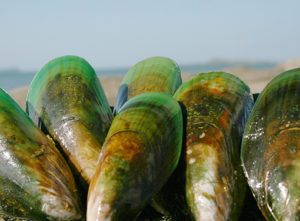 Biolane is the original, unique extract from the New Zealand Green-Lipped Mussel