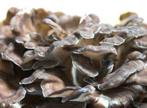 Gripin is a phytolipid compoound extracted from the Maitake mushroom.