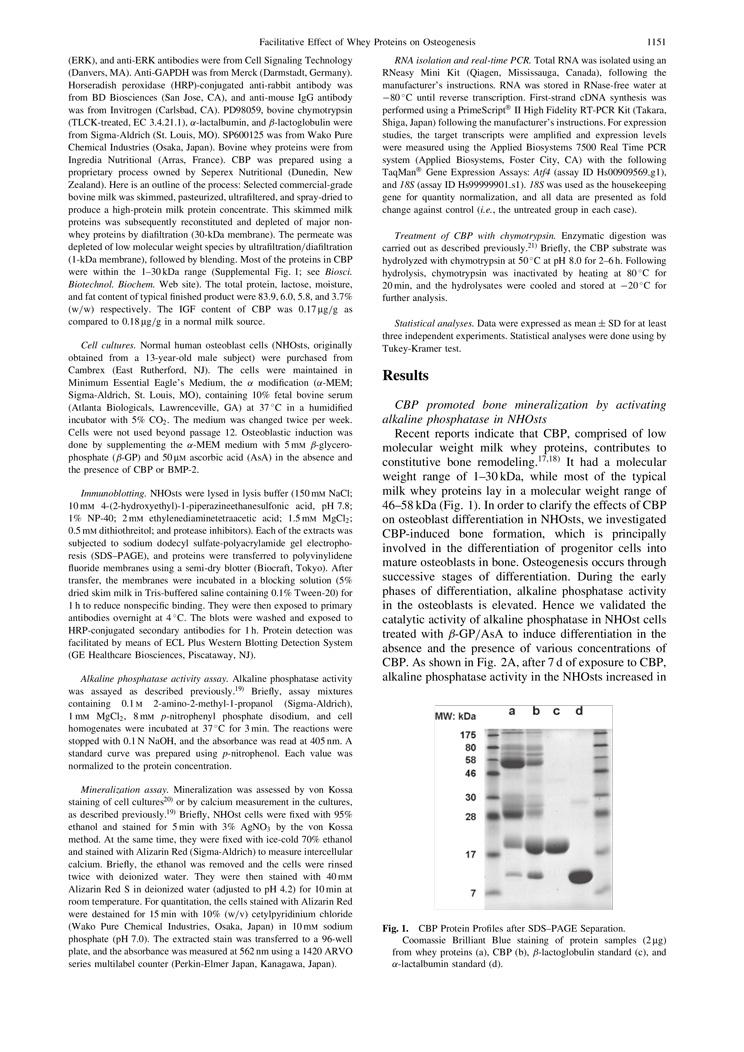 CBP Facilitate Osteogenesis through Activation of the JNK-ATF4 Pathway P3