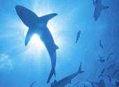 มาโคลิปิน (Macolipin ลิปิดสกัดจากปลาฉลาม)