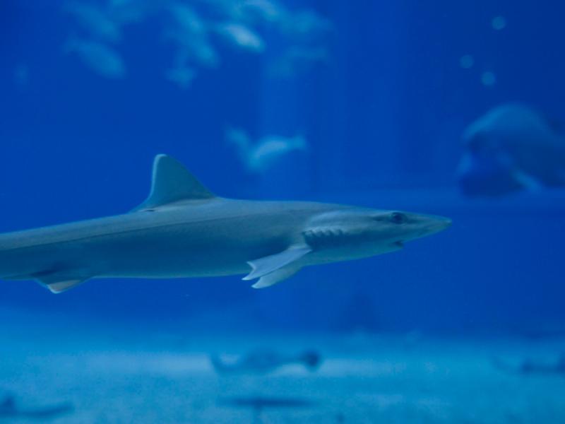 ニュージーランド産鮫軟骨 - ハイマート取り扱い原料