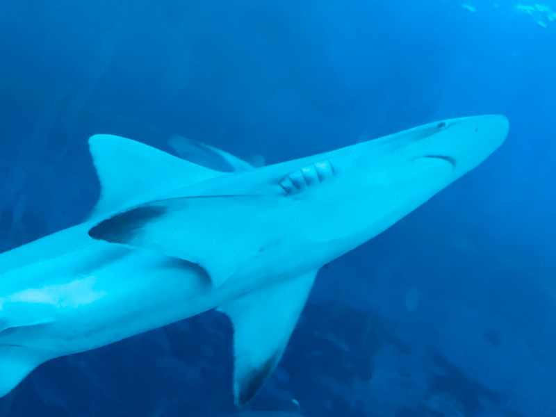 深海サメ肝油 - ニュージーランド産健康食品原料
