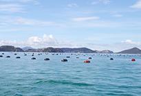ニュージーランドの緑イ貝は特定水域に生息します。