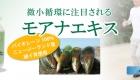 モアナエキスはバイオレーン100%、ニュージーランド産緑イ貝のサプリメントです。